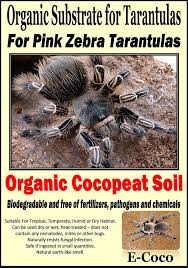 E-Coco Products UK ORGANIC PINK ZEBRA BEAUTY TARANTULA SUBSTRATE ... Zebra Tarantula Amazoncouk Grocery Papo 50190 Free Shipping Chevrolets Hydrogenpowered Stealth Truck Enlists With U S Army Video Up Close Taboo The Tarantula Madisoncom Outdoors Anyone Else Into Lowerstanced Longboard Kinda Thing Built This 1939 Chevy Dirttrack Racer Was Reborn As A Street Car Hot What Is This Guy Milwaukee Wi Hes Helping Mechanic Work On Birdeater Spider Brachypelma Smithi Natural Stock Photo Trucks Commercial Youtube Ford Black Widow Lifted Trucks Sca Performance Black Widow Boehmei Tarantulas Terrapins And Rtoises Are Bring Biology Lessons To