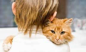 fleas on cats symptoms does my cat fleas symptoms and signs of fleas on cats