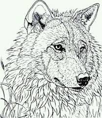 Adult Coloring Pages Wolf See More