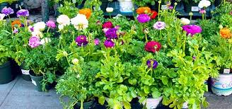 Brightly Colored Potted Flowers Outside In The Sun