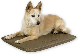 Top Rated Orthopedic Dog Beds by Buying A Dog Bed