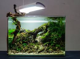 Simon's Aquascape Blog Aquascaping Fish Tank Projects Aquadesign George Farmers Live Aquascaping Event At Crowders Ipirations Mzanita Driftwood For Inspiring Futuristic Home Planted Riddim By Alejandro Menes Aquarium Design Contest Ada Horn Wood Beautiful Natural Hardscape For Superwens 2012 Aquascape Petrified Youtube Fish Aquariums The Worlds Best Planted Aquarium Products Designs Reviews Out Of Ideas How To Draw Inspiration From Others Aquascapes 7 Wood Images On Pinterest Sculpture Lab Tutorial Nano Cube Size 20 X 25h