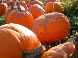 Goebbert Pumpkin Patch In Barrington Il by 10 Pumpkin Patches Fall Fests Worth Checking Out This Fall