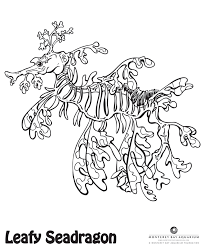 Sea Dragon Coloring Pages