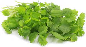 Salad Burnet Information and Facts