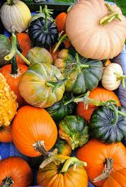 Types Of Pumpkins And Squash by Picking Pumpkins At The Farm The Martha Stewart Blog