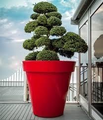pot bonsai grande taille pot rond grande taille déco sonofep