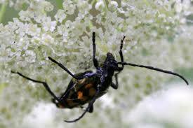 schwarze käfer im bad was tun