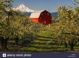 USA, United States, America, Oregon, Mount Hood, Barns, Farms, Red ... Rustic Autumn Wedding Weston Red Barn Farm In Kc Mo Mini Shop Cellar Orchard Wood Shed All On And Stock Photo Image 59789270 Minnesota Harvest Apple Weddingreception Venue The At Gibbet Hill Pictures From The Orchard Weve Got Your Favorite Review Of Park Na Usa Oregon Hood River County Barn Pear Building And Golden Ears Coast Mountains Fall Landscape Unique Bolton Ma A Red Schartner Massachusetts Best Horse Designs Hardscape Design
