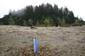 Santa Cruz County Christmas Tree Farms by Oh Christmas Tree Open Space District Chops Down Tree Farm To