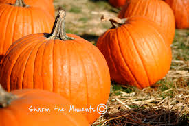 Pumpkin Patches Columbus Oh by The Orchard And Company Pumpkin Patch In Plain City Oh Offers A