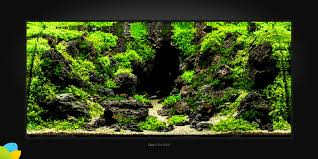 Kim Pulkki • Aquascaping Love Planted Tank Contest Aquarium Design Aquascape Awards How To Create Your First Aquascaping Love Pin By Marius Steenblock On Pinterest The Month September 2008 Pinheiro Manso Creating Nature Part 1 Inspiration A Beginners Guide To Aquaec Tropical Fish Style The Complete Brief Progressive Art Of 2013 Xl Pt2 Youtube Aquadesign Dutch Sytle Aquascape Best Images On Appartment Iwagumi Der Der Firma Dennerle Ist Da Aqua Nano
