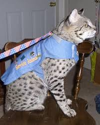 service cats renegades save our service animals service animals affected by