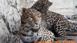 le zoo fauverie du mont faron à toulon