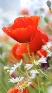 1000 Images About Beautiful Flowers Wallpapers Pictures PC Full