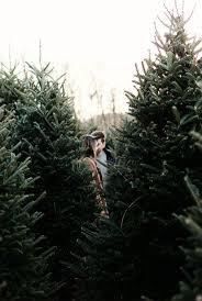 Most Common Christmas Tree Types by 58 Best Seasons U0026 Holidays Images On Pinterest Illinois