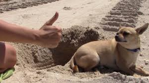 I Buried My Dog Alive ! - YouTube How To Install Invisible Dog Fence Wire Youtube To Bury A Pet In 6 Simple Steps Digging Create A Sandbox Just For His Digging I Like The Build Sandbox And They Will Come Thepetdoctormbcom New Ny Law Allows People Be Buried With Pets Peoplecom Burial Funerals Malaysia Transparent Pricing Your Trusted Puppy Loves Be Buried In Sand When Pet Is Dying Owners Face Options Deputies Dig Grave Help Woman Dead Dog Two Boys Backyard Burying Bird Stock Photo Getty Images Yard That Himself Alive While Chasing Skunk Line