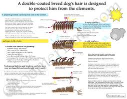 Dogs That Shed Little Hair by Double Coated Breed Dog Grooming Infographic Art Print Dog