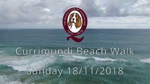 100 Currimundi Beach Beagle Club Of Queensland Walk 2018