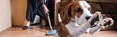 Dog Hair Carpet Removal by The Best Vacuums For Pet Hair