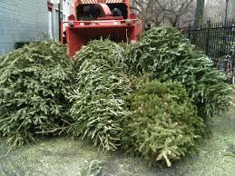 Wyckoff Christmas Tree Farm by Events Brooklyn Feed