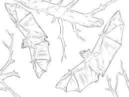 Click To See Printable Version Of Common Fruit Bats Coloring Page