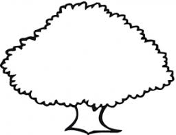 Oak Tree Pine Coloring Page