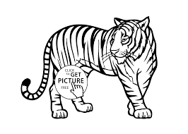 Wild Animal Coloring Pages Tiger Animals For Kids Printable Free To Print