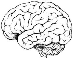 Brain Coloring Pic Picture Human Book Pdf Free Pages Images Of Photo Albums Anatomy Large