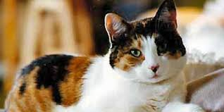 orange cat names unique calico cat names 44 names to check out