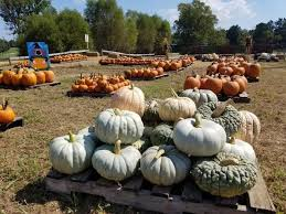 Pumpkin Patch Nashville Area by These 7 Charming Pumpkin Patches In Tennessee Are Picture Perfect