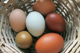 Bad Eggs Do They Float Or Sink by The Chicken Egg Float Test Indicates Approximate Age Not