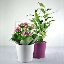 plante d駱olluante bureau evènements de printemps offrez des graines et plantes