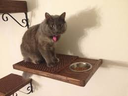 Make food dish shelves to keep your cat s food out of reach from