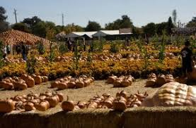 Morgan Hill California Pumpkin Patch by Agriculture Discover Coyote Valley