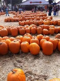 Pumpkin Patch Fresno Clovis by Pumpkin King Pumpkin Patch 100 W Shaw Ave Fresno Ca Pumpkin