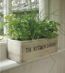 faire pousser des plantes aromatiques en intérieur le coin potager