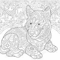 Photo Stock Vector Coloring Medium Siberian Husky Pages