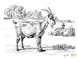 Goat Coloring Pages 29
