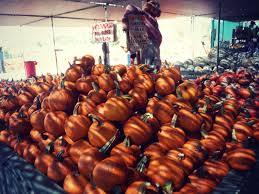 Hillcrest Farms Pumpkin Patch by Cvlux U2014 Lux Celebrate Fall Best Family Harvest Destinations