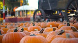 Uc Irvine Pumpkin Patch by Fall Things To Do In La Her Campus