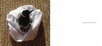 penguin the magpie book by cameron bloom bradley trevor greive