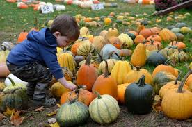 Best Pumpkin Picking In South Jersey by Columbus Pumpkin Patches Farm Activities And Corn Mazes