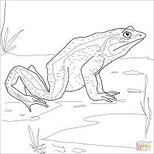 Dibujo De Rana Goliat Para Colorear Dibujos Para Colorear