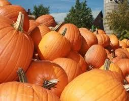 Pumpkin Patch In Homer Glen Illinois by Best Pumpkin Patches Near Chicago Cbs Chicago