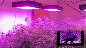 mercial Cannabis Grow Platinum XL U LED Grow Light 10 000