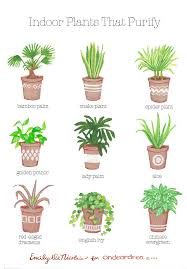 Small Plants For The Bathroom by Simple Natural Living The Best Air Purifying Plants For Your Home