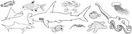A PDF Of All The Following Ocean Animal Coloring Pages For Downloading And Printing Out