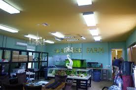 led light bulb synergy lighting
