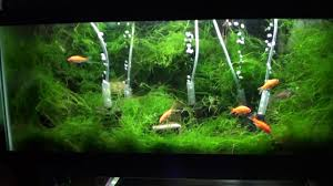 Java Moss Aquascape - YouTube Aquascapes Unlimited Best Of Amazon Com Aquascape Micropond Kit 6 Amazoncom 58066 Stainless Steel Terwall Spillway Unique Opsixmailcom 3932 Best Images On Pinterest Aquascaping Aquariums 98948 Dry Beneficial Bacteria For Pond And Aquarilandschaften Gestalten Amazoncouk Oliver Rock Scape Aquascapez Aquarium Rocks Tutorial Natures Chaos By James Findley The Making Introduction To Red Cherry Shrimp